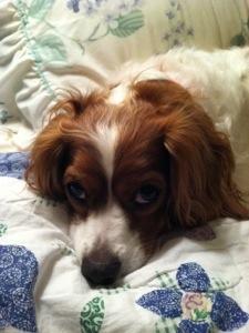 Penny the Wonder Dog