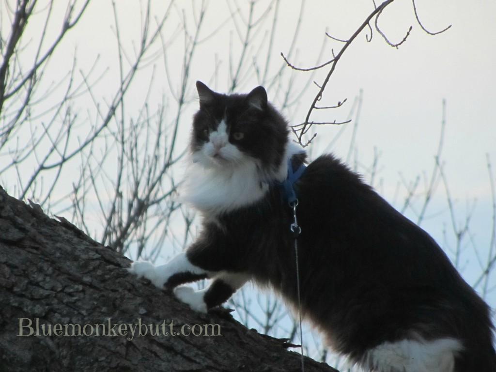 Snuffy Cat