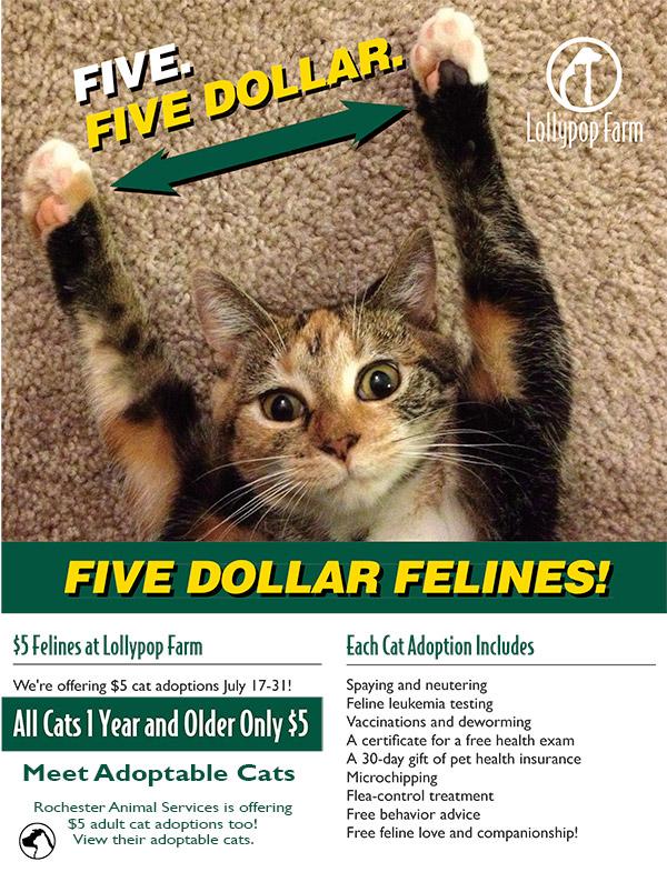 FIVE-DOLLAR-FELINES-AS-SMART-OBJECT-1
