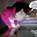 Meow Monday Halloween Style