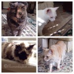 Wordless Wednesday – Three Out Of Four Cats Agree