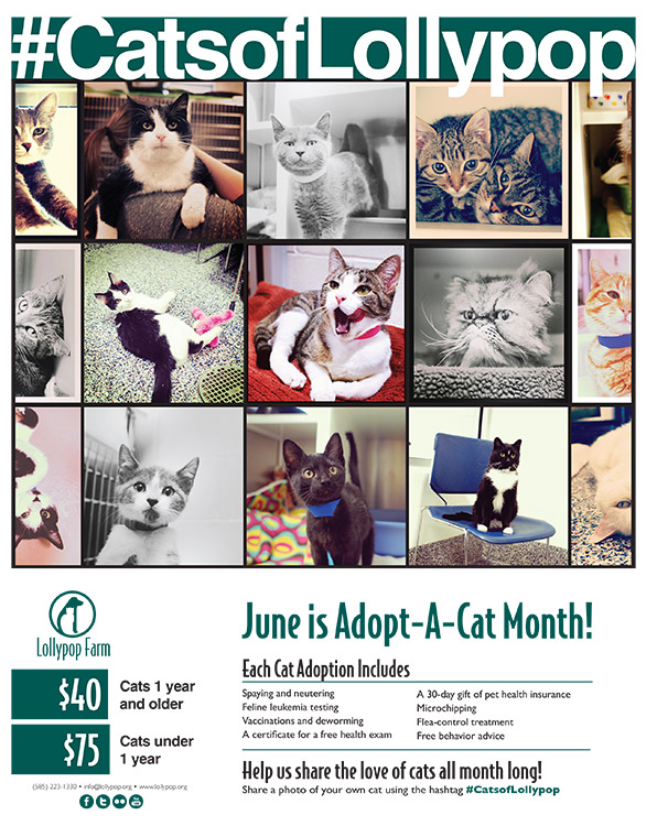 National Adopt a Cat Month