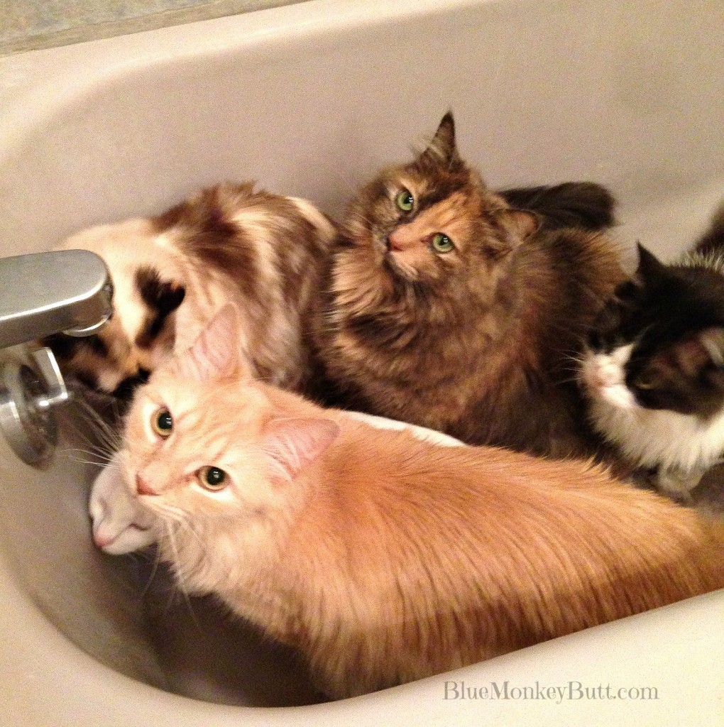 5 cats in a tub