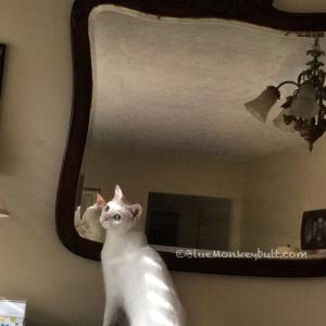 Rosie Meow Monday