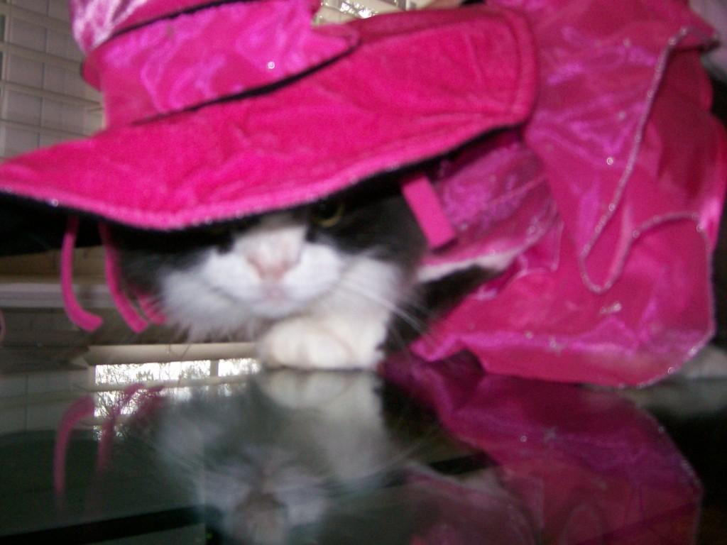 Almost Halloween Meow Monday
