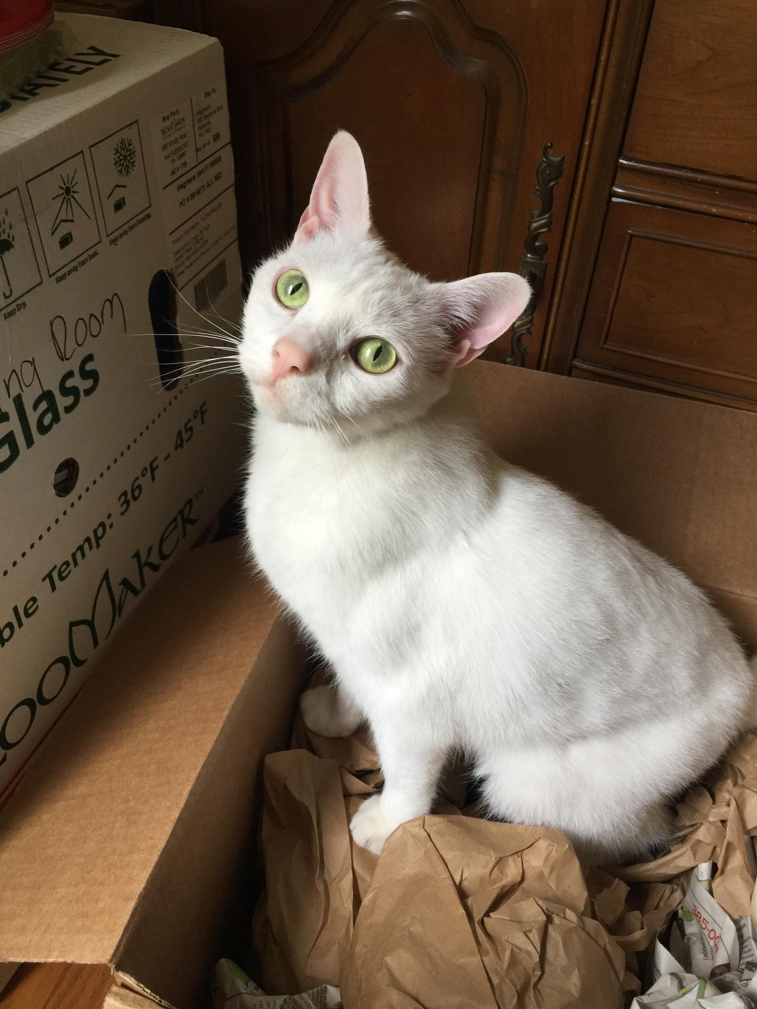 meow Monday Rosie helping unpack
