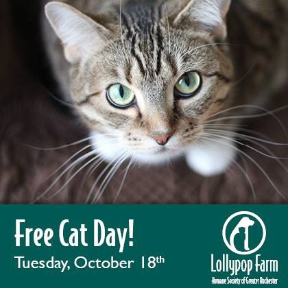 meow monday free cat day