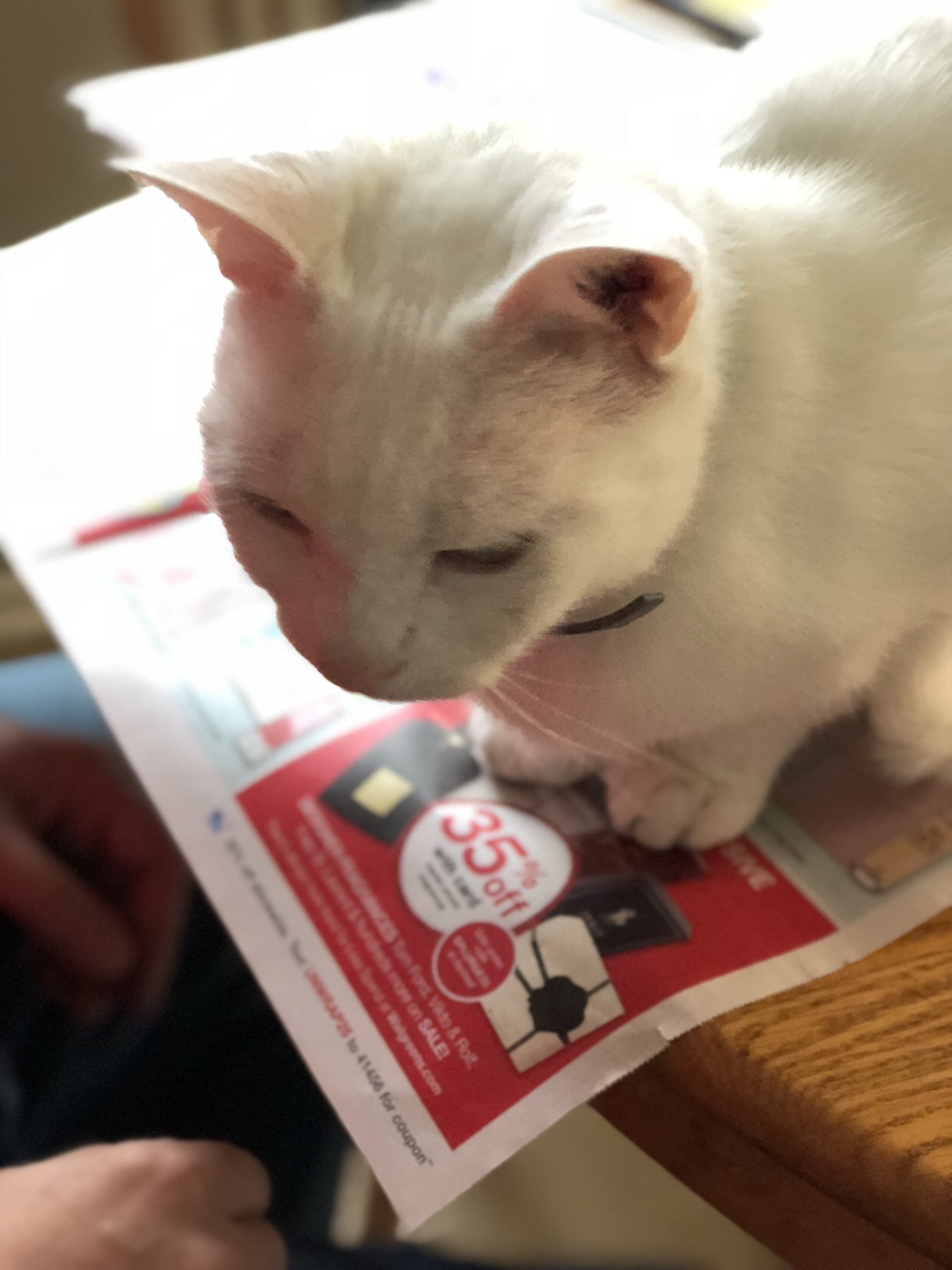 Rosie the cat sitting on the newspaper