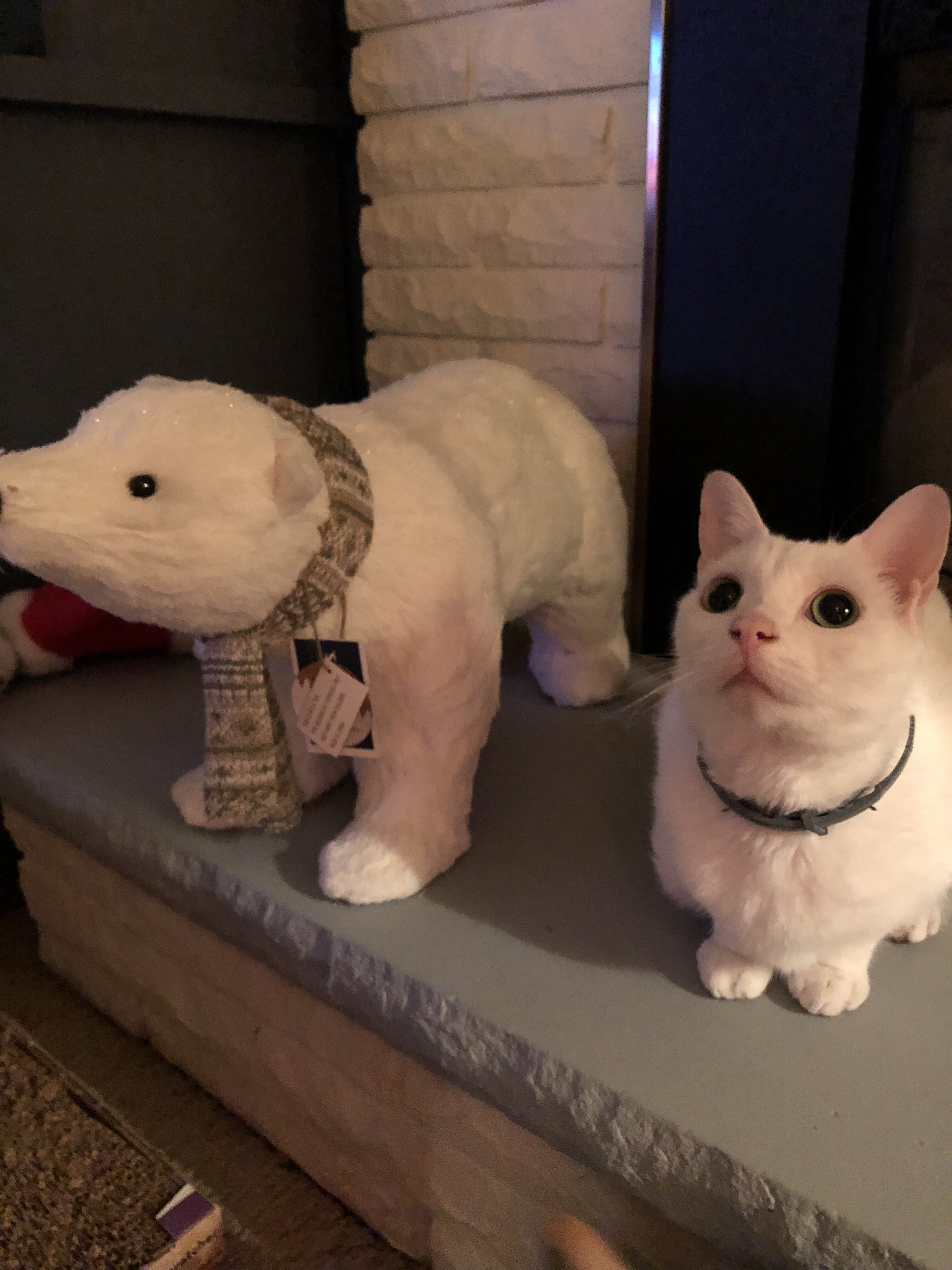 Rosie the cat sitting on the fireplace next to a stuffed polar bear