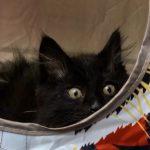 Foster Meow Monday