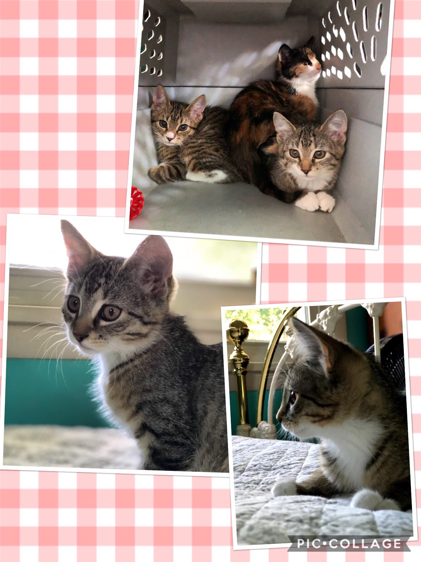 Kitten collage