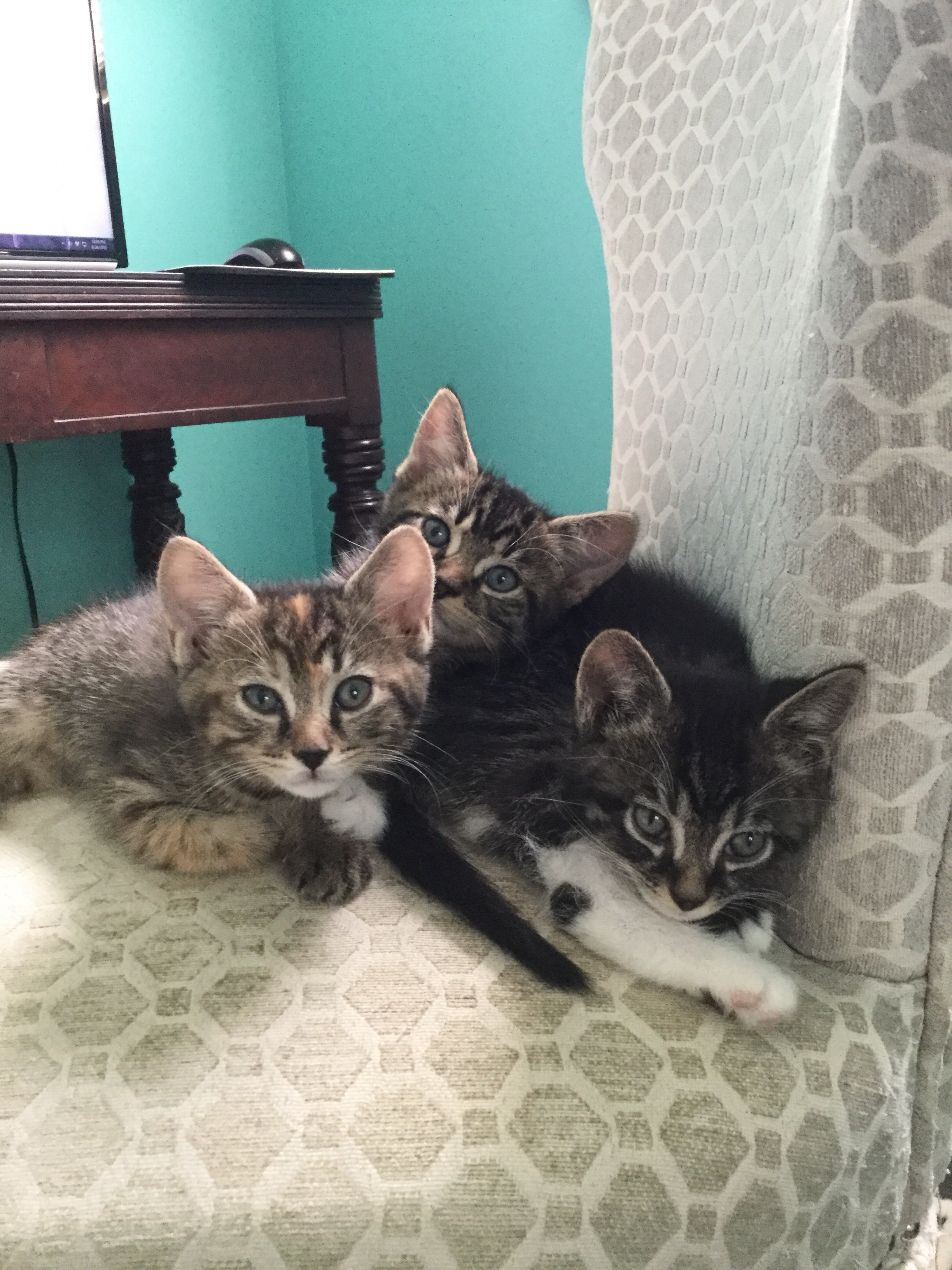 Three kittens in a chair Meow Monday
