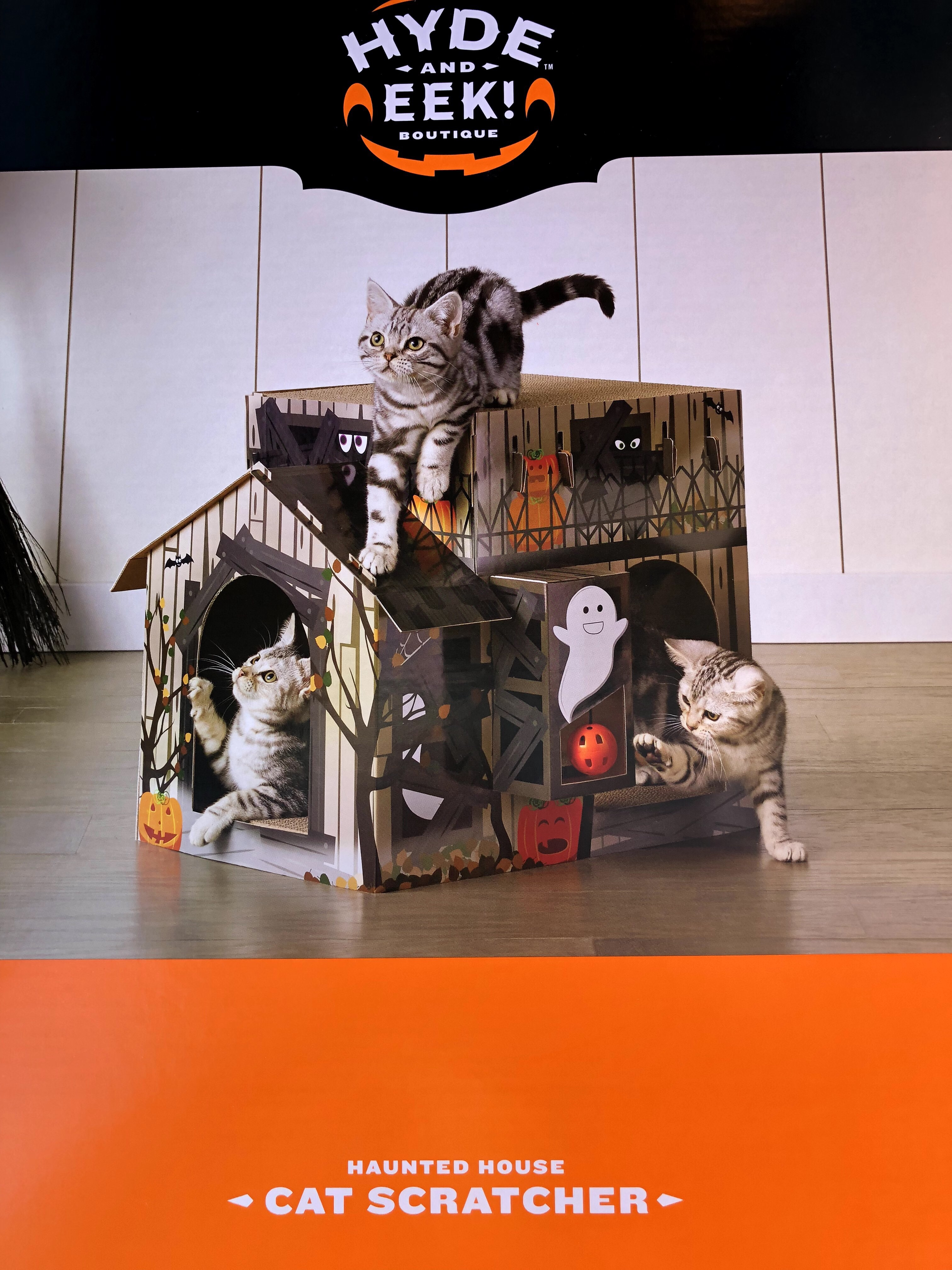 Cats playing in cardboard haunted house spooky meow Monday