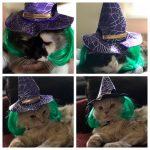 Halloween Fun Meow Monday