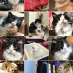 Meow Monday 2018 Instagram Recap