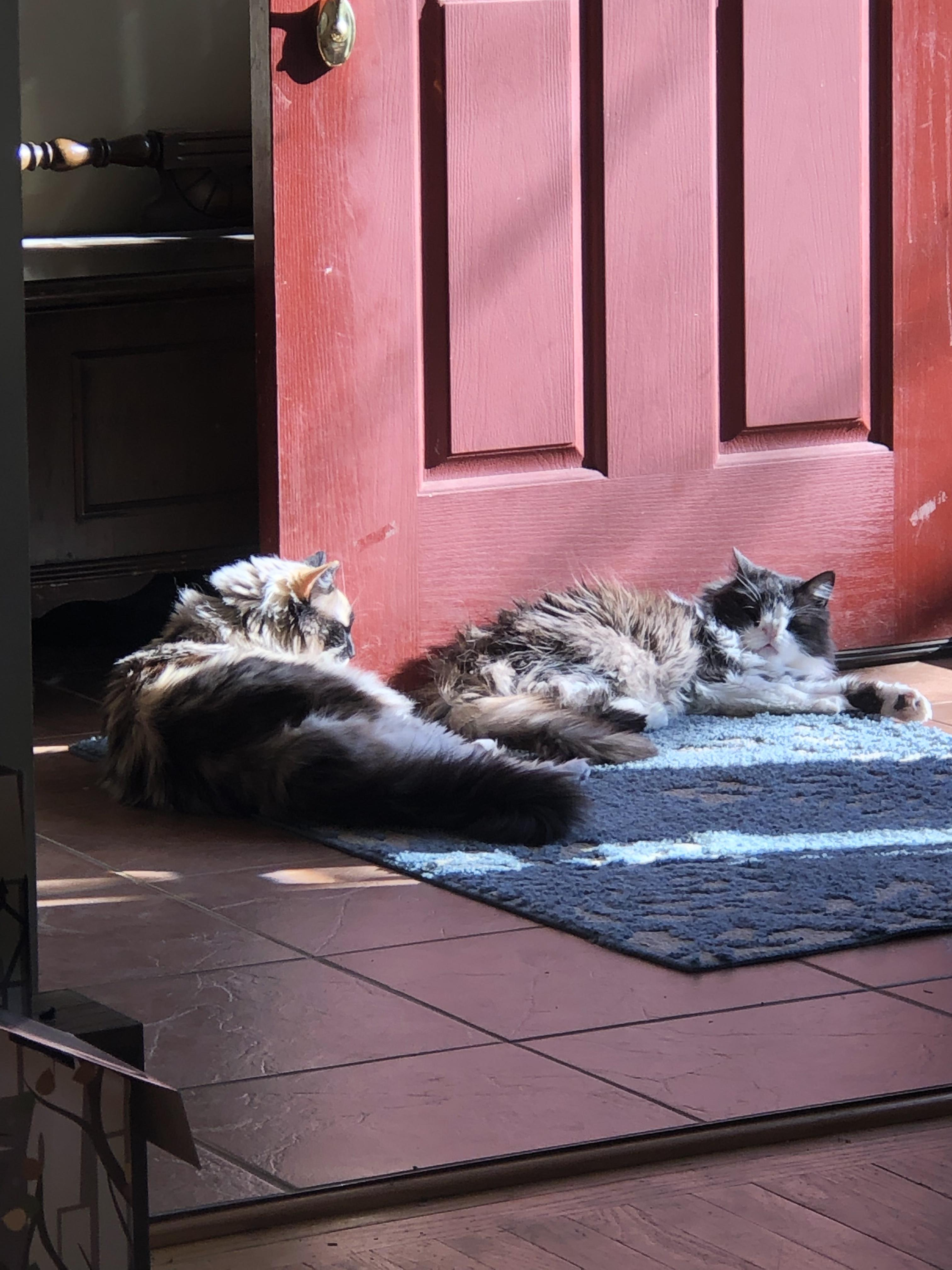 Two cats enjoying the sunshine