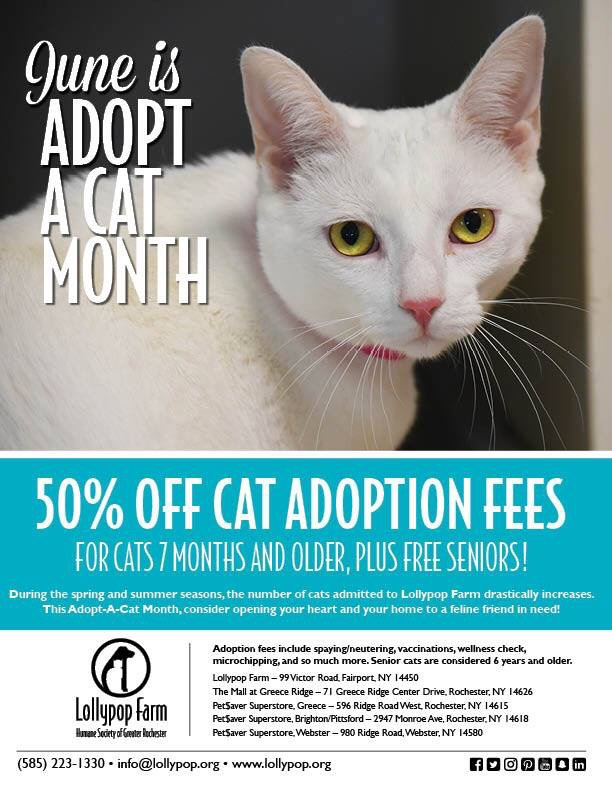 White cat on ad for adoption special for the month of June