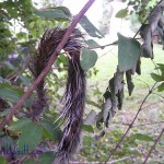 Random Tuesday Thoughts~Allergies & Squirrel Tails