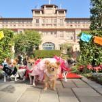 Beverly Hills Chihuahua 3 Viva La Fiesta Blu-Ray Combo Pack Review