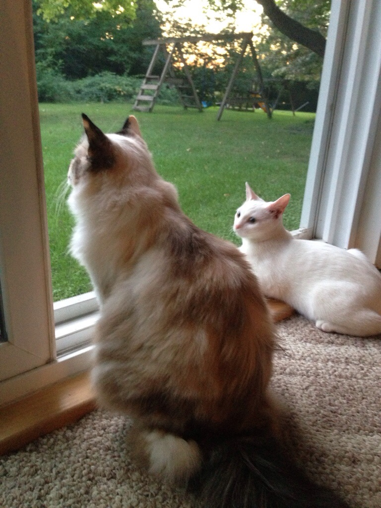 Meow Monday Jezebel & Rosie looking out the window