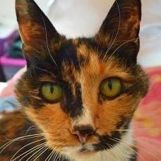 Geri the cat, Lollypop Farm Pet of the week