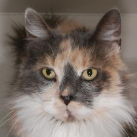 Lily our Lollypop Farm Pet of the Week