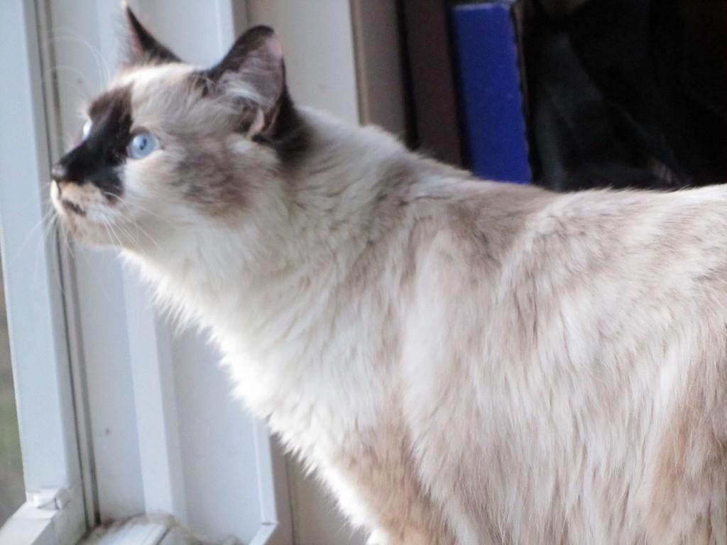 Jezebel saying Hello Spring Meow Monday