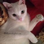 Rosie Posy Meow Monday