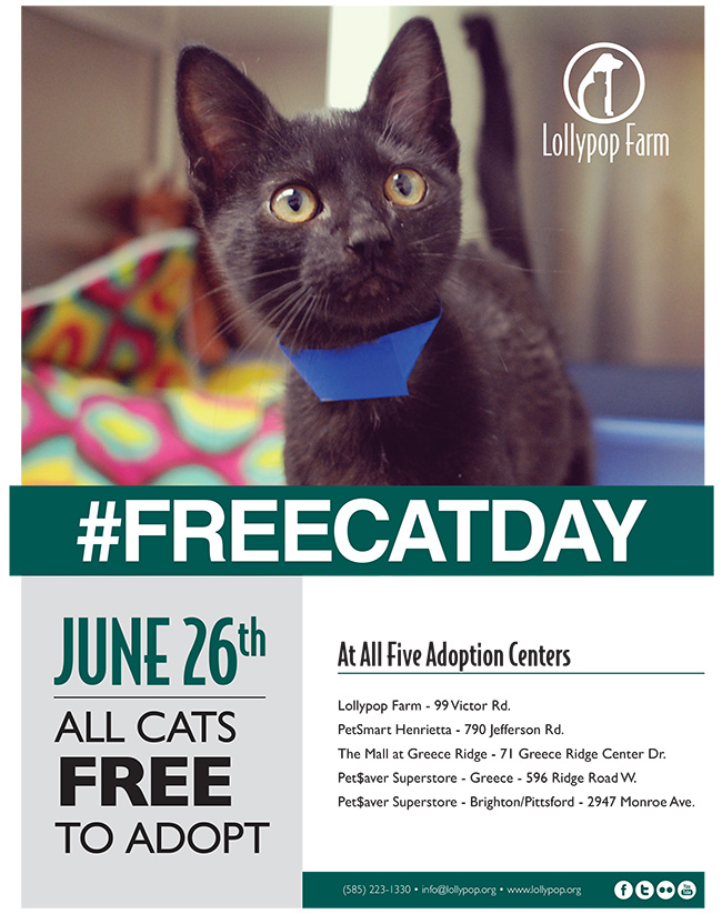 Rosie Posy Meow Monday Free cat day June 26 2014