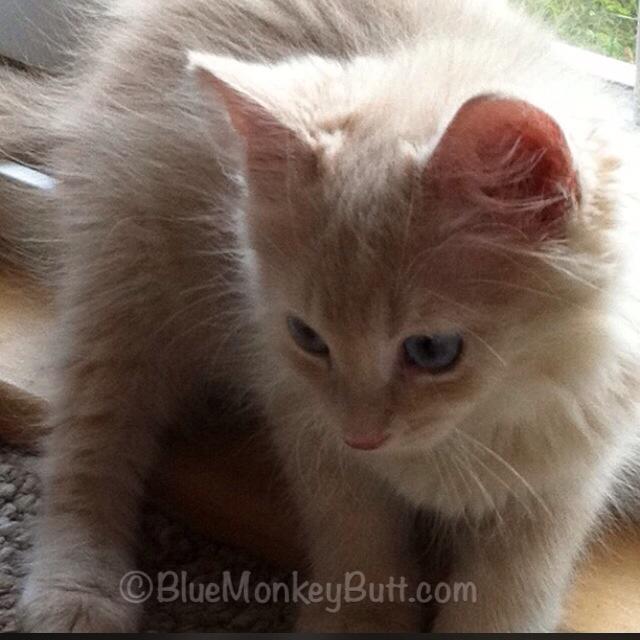 George as a kitten