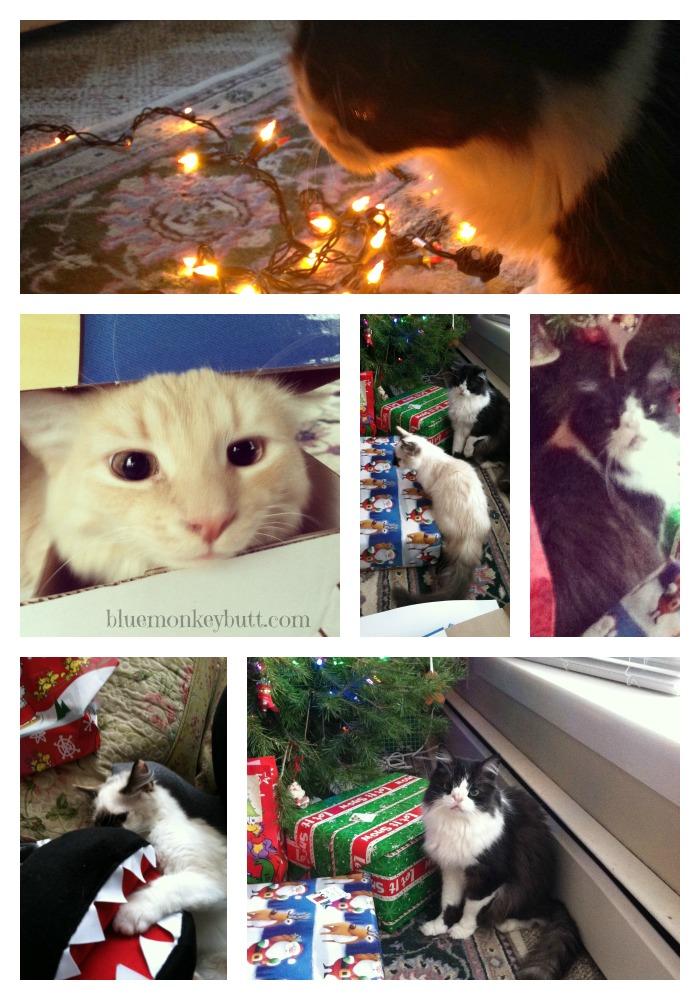 Meow Monday Christmas Edition