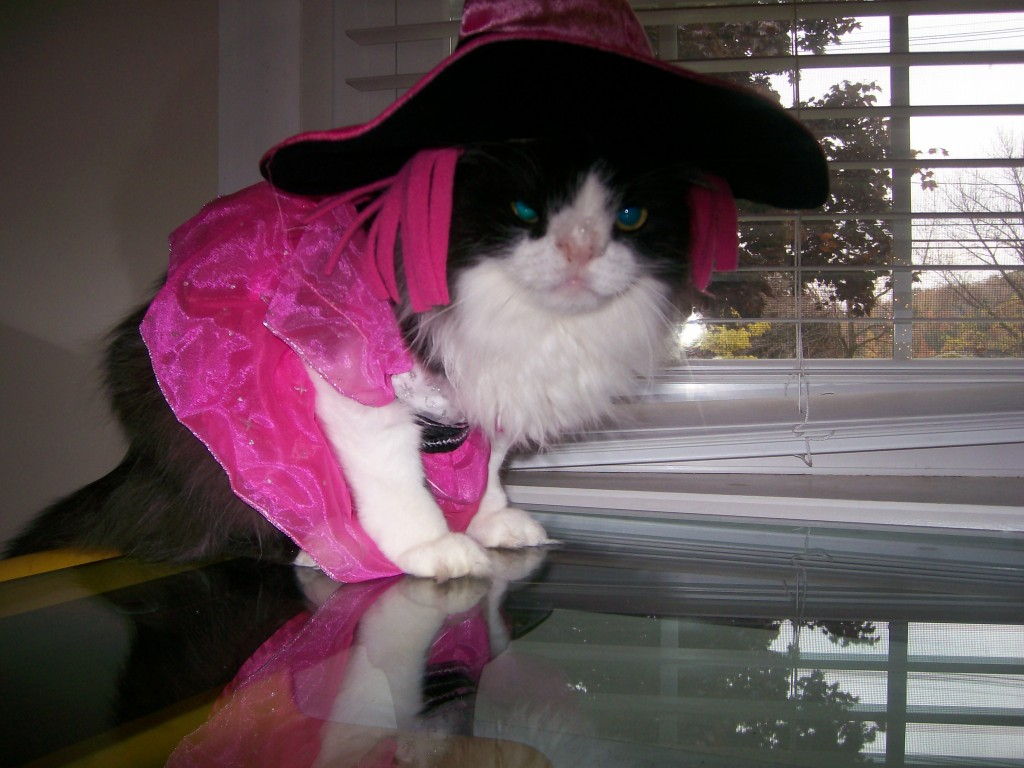 Almost Halloween Meow Monday - poor Snuffy