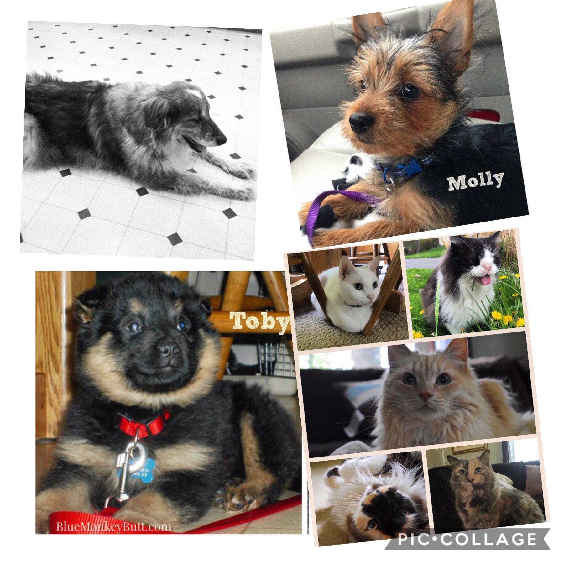 Collage of cats and dogs