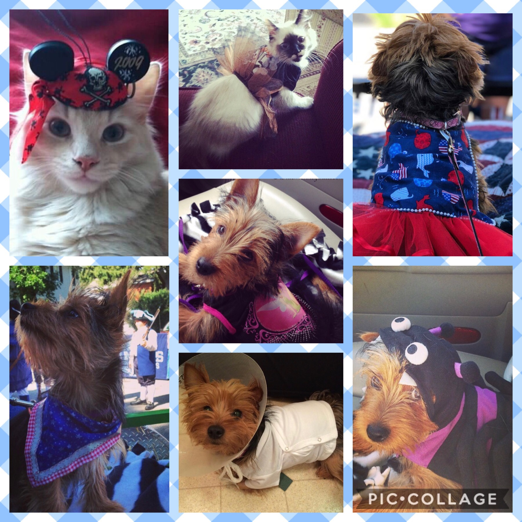 National dress up your pet day collage of a yorkie and two cats wearing hats and costumes
