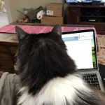 Working from Home with Cats
